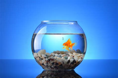How to Make Your Goldfish Live Longer