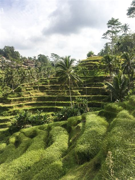 THE TEGALLALANG RICE TERRACES IN UBUD, BALI (GUIDE) - 2020