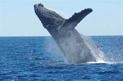 Why Are Whales Whale-Sized? - Science Friday