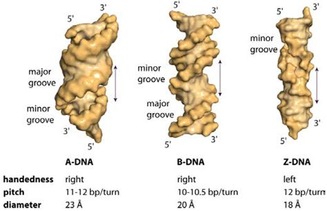 IJMS   Free Full-Text   Making the Bend: DNA Tertiary