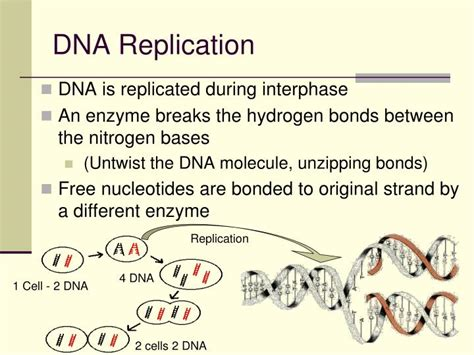 PPT - Chapter 12 DNA: The Molecule of Heredity PowerPoint