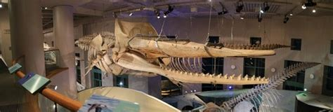 North Carolina Museum of Natural Sciences (Raleigh) - All