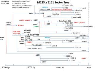PPT - Y-DNA Haplogroup I-M223 Phylogenetic Tree PowerPoint